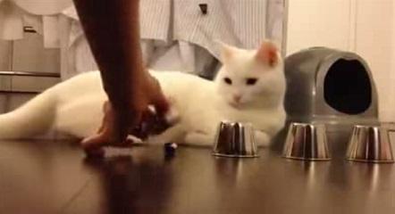 חתול חכם משחק זיכרון