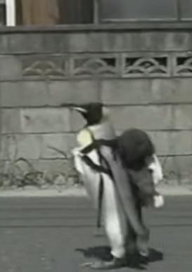 חמוד- פנגווין עושה קניות