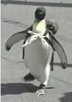 פינגווין הולך לקנות דגים