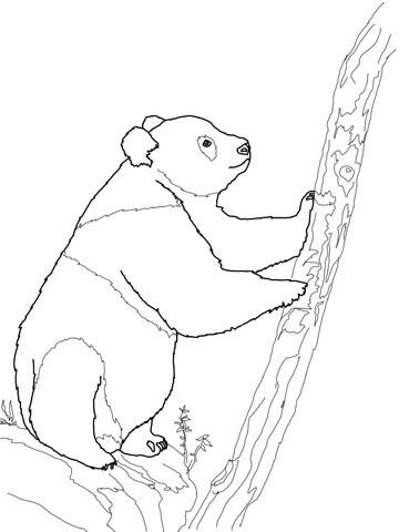פנדה מטפסת על עץ
