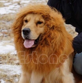 פאה לכלב אריה
