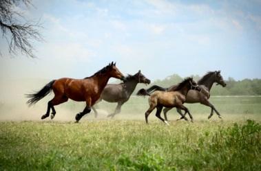 יום הסוס