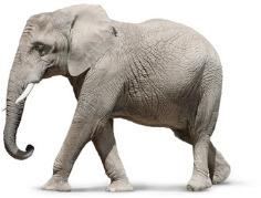 יום הפיל