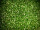 דשא סינטטי רומח 42