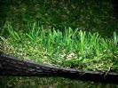 דשא סינטטי פינק 38
