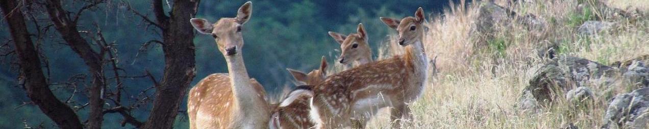 תיירות בעלי חיים