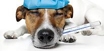 חיסונים וטיפולים מונעים