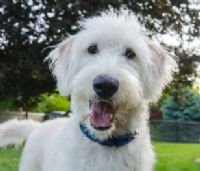 התייעצות מקצועית למטפלים - כלב