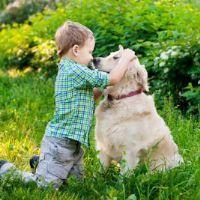 לימודי כלבנות טיפלית - ילד עם כלב