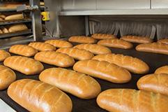 הדברה במפעלי מזון