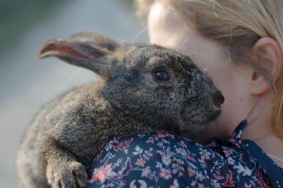 ילדה עם ארנבון