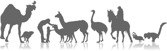 מרכז חוויות  - טיפול בעזרת בעלי חיים